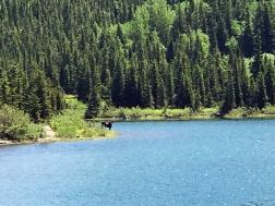 Moose in Far Distance
