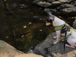 Gabby watching fish at waterfall
