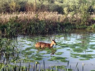 DeerWater