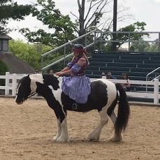 paradehorse3