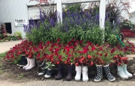 Rain boots as Planters