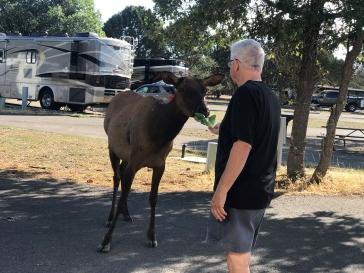 Bill Elk