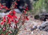 Flowers on Hike