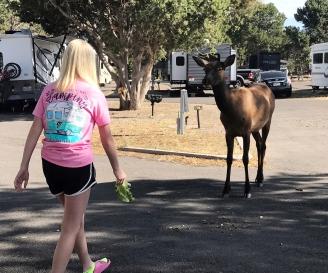 Lily feeding Elk
